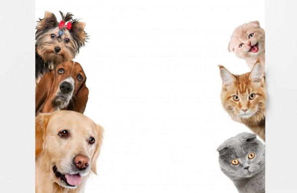 Tierschutz-Band