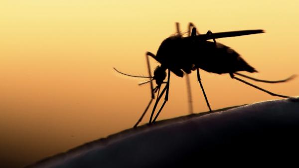 Mückenschutz-Band
